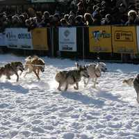 Yukon Quest Dog-Sledding Race start in Whitehorse, Yukon Territory