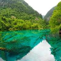 Jiuzhaigou landscape with green water in Sichuan, China