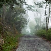 Path through the foggy forest in Boyaca, Columbia
