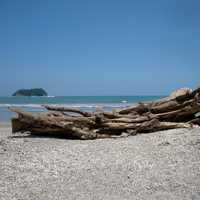 Log on sandy beach in Costa Rica