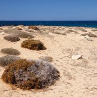 Sand and Beach Landscape in Cyprus