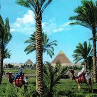 Pyramids of Giza with trees in the foreground in Egypt