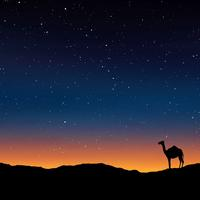 Camel under the stars in Egypt