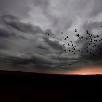 Birds Migrating under the clouds at dusk