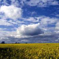 Rapeseed and sky landscape in England