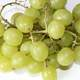 Green Grapes looking delicious