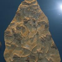 Early Paleozoic Fossils