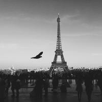 Bird Flying near the Eiffel Tower in Paris, France