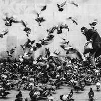 Man with Pigeons in Paris, France