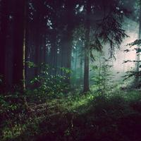 Inside the forest at Bad Pyrmont, Germany