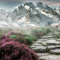 Mountain landscape with flowers and hiking steps in Steinweg, Germany