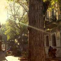 Light shining on city and trees in Athens