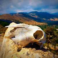Skull with landscape background on Crete, Greece