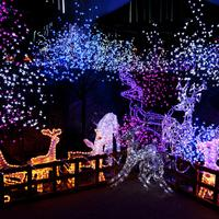 Lights and Christmas Decorations with animals and tree lights