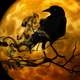 Crow standing on Branch in front of full moon scary Halloween Scene