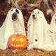 Dogs in Ghost Halloween Costumes