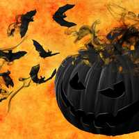 Evil Black Halloween Pumpkin with Bats