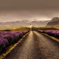HDR Photo by Mountains and road with flowers in Iceland