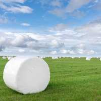 Marshmellow like Bales of Hay
