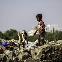 Boy and Goat in Delhi, India