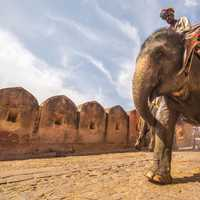 Man Riding an Elephant in Jaipur, India