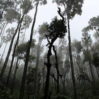 Trees growing from the Ground in Chikkamagaluru, India