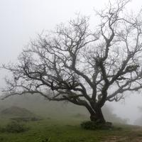 Trees in the landscape in the fog, India