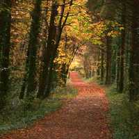 Hiking Trail through the Autumn Trees