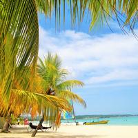 Tropical trees and beach and Jamaica