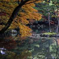 Autumn Leaves and Lake in Kyoto, Japan