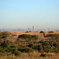 Game Preserve with Nairobi in the Background