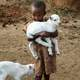 Boy carrying young lambs in Kenya, Africa