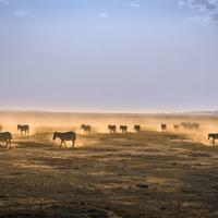 Dusty landscape and wildlife in Kenya