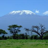 Mount Kilimanjaro landscape rising behind the trees