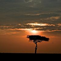 Sunset over the Plains landscape in Kenya