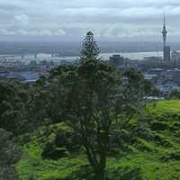 Landscape view from atop Mount Eden in Auckland, New Zealand