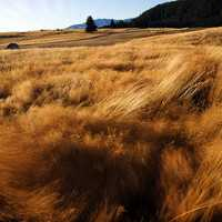 Wind Blown Grasses and landscape in New Zealand