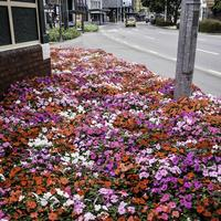 Flowerbed in Wellington, New Zealand