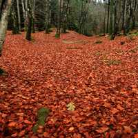 Red leaves on the forest floor