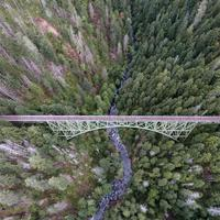 Aerial View of Bridge and Trees