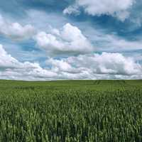 Agriculture landscape under clouds and sky
