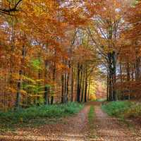 Autumn Forest Walking Path