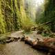 Beautiful Fern Canyon