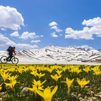 Biker going past Mountain landscape with flowers