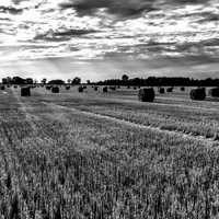 Black and White farmland landscape with hay bales