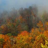 Colored autumn trees and leaves in the fog