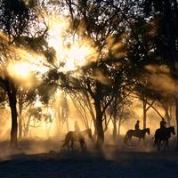 Cowboys in the landscape with light exploding from the trees