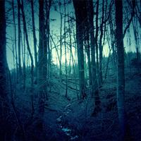 Dark Forest Landscape