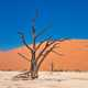 Dry tree in the desert dunes