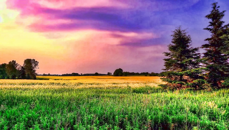 Dusk Color Sky With Grassy Field Image
